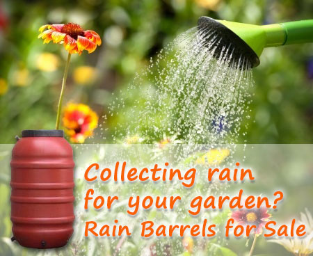 Collecting Rain for Your Garden? Rain Barrels for Sale