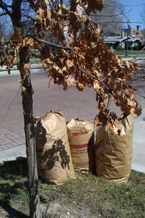 landscape waste in yard waste bags on a curb